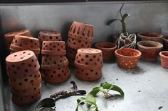 Ryan came upon these great pots in the greenhouse basement. I think I found them at a tag sale. The natural clay material is porous and allows roots to breathe and the numerous drainage holes help protect against over watering. Orchid Roots, Orchid Leaves, Orchid Plants, All Plants, Indoor Plants, Orchid Supplies, Hanging Orchid, Martha Stewart Blog, Growing Orchids