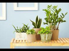 Самые полезные комнатные растения. Цветы для дома. - YouTube