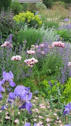 The Gravel Garden - Beth Chatto. A peach helianthemum, blue iris, salmon oriental poppy, 2 varieties of euphorbia, pink phlomis, nepeta, artemesia frigida, stipa gigantea