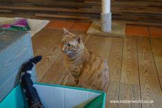 Cat Travel: Neko no Jikan Amemura – Osaka Cat Cafe Part 4 find this amazing photo from Katzenworld