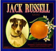 Items similar to The Marshall Canyon Collection - Jack Russell Terrier Dog Orange Citrus Fruit Crate Box Label Art Print on Etsy Vintage Advertisements, Vintage Ads, Vintage Posters, Vintage Crates, Vintage Signs, Vintage Food Labels, Label Art, Vegetable Crates, Vintage Trends