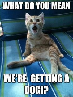 This is exactly what my cat was thinking when we first got our dog!