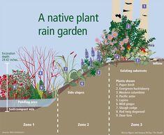 Rain gardens: Nature's sponge Back Gardens, Outdoor Gardens, Yard Before And After, Rain Garden Design, Unique Garden, Garden Images, Dry Creek, Plantation, Front Yard Landscaping