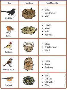 Bird Egg Identification, Bird Theme, Nature Journal, Backyard Birds, Bird Feeders, Bird Nests, Information About Birds, Bird Watching, Beautiful Birds