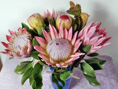 The King Protea has a vase life of 14 to 21 days, sometimes longer, split stem ends for maximum water absorption! Purchase your King Proteas from Bofberg Flowers before they go out of season. Tropical Flowers, Botanical Flowers, Exotic Flowers, Beautiful Flowers, Ikebana Arrangements, Flower Arrangements, Florida Trees, Australian Native Garden, Protea Flower