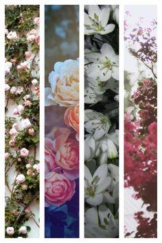 #flowers #blossom #beautyofnature