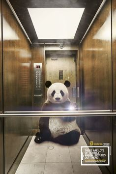 In a new advertising campaign, National Geographic imagines what it might look like if animals including pandas and gorillas took selfies. Creative Advertising, Print Advertising, Advertising Campaign, Print Ads, Ads Creative, Creative Review, Advertising Ideas, Creative Ideas, National Geographic