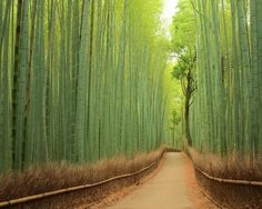 // Sagano Bamboo Forest, Japan / 50 Most Breathtaking Places to Visit Before You Die