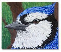 Arrendajo Azul /Blue Jay