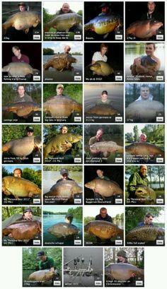 Carp fishing Fishing Knots, Fishing Guide, Sport Fishing, Fly Fishing, Sea Angling, River Monsters, Giant Animals, Fishing Times, Coarse Fishing