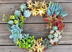 Garden Trend: Make Living Wall Art With Succulents