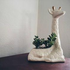Handmade Ceramic Giraffe Planter. White glaze and 24k gold ossicones.  From vintage molds and perfect for plants or succulents.
