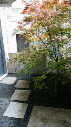 Acer Palmatum Atropurpureum in ÁBATON gardens