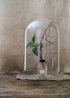 DIY terrarium centerpiece....we all know what this looks like....beauty and the beast ;)