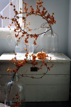 Holiday Decorating with Bittersweet Vine |