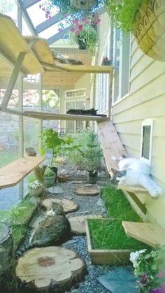 Outdoor Cat Enclosure, Cat Run, Cat Playground, Outdoor Cats, Crazy Cats, Cats And Kittens, Backyard, Manecoon Cat, Munchkin Cat