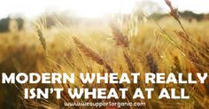 Something Terrible Was Done to Our Wheat in the 60′s and We're Just Realizing it Now // replace with spelt flour