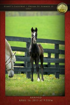 Tales from the Crib: Destin | 2016 Kentucky Derby & Oaks | May 6 and 7, 2016 | Tickets, Events, News