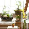 Top Plants for Terrariums - good article, but you have to watch an ad in order to read it (boo.)