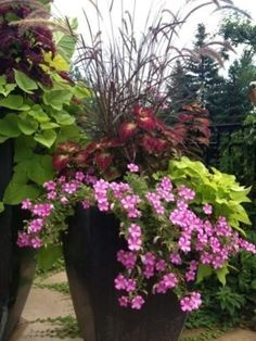 Gorgeous Full Sun Container Plants Ideas To Make Up Your.- Gorgeous Full Sun Container Plants Ideas To Make Up Your Garden Container garden ideas - Full Sun Container Plants, Full Sun Plants, Container Flowers, Flower Planters, Garden Planters, Container Gardening, Flower Pots, Flower Ideas, Sun Flowers