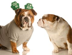 This'll help you get pumped for St. Patty's Day! Click through for more adorable dog costumes.