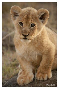 Kenya –Masai Mara by Fraser Cassidy on 500px