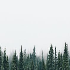 69 Ideas for wild nature forest evergreen Beautiful World, Beautiful Places, Fuerza Natural, Foto Art, Adventure Is Out There, The Places Youll Go, The Great Outdoors, Wonders Of The World, Into The Wild
