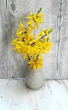 Vase, Plants, Home Decor, Herbal Medicine, Alcohol, Flowers, Decoration Home, Room Decor, Plant