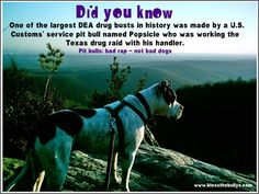 Popsicle was the first DEA Pitbull and was found in a freezer frozen near to death