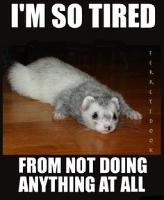 I hate days like that, I feel so useless then -_- Ferrets Care, Baby Ferrets, Funny Ferrets, Pet Ferret, Animals And Pets, Baby Animals, Funny Animals, Cute Animals, Animals Beautiful