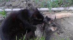 Kiscicák Black Bear, Dogs, Animals, Animales, American Black Bear, Animaux, Doggies, Animais, Dog