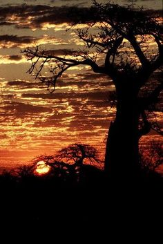 Rhodesian Sunset