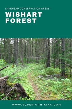 Experience the unique boreal forest in Northwestern Ontario by hiking this trail located in the Lakehead Region Conservation Area. Blueberries and mushrooms can be found along the family-friendly trails. Click through for trail details and directions. Hiking Checklist, Forest Conservation, Summer Hiking Outfit, Mushroom Hunting, Forest Trail, Wild Mushrooms, Fruit Garden, Lake Superior, Hiking Trails