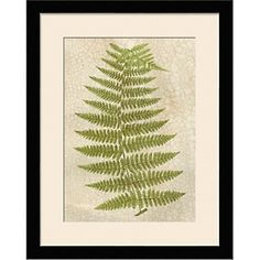 Crackled Fern - Framed Giclee Print at HSN.com#HSN and #HouseBeautiful.