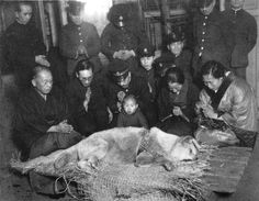 A rare last picture of Hachiko's funeral, a dog who changed the way dogs were seen by the world. In 1924 at the University of Tokyo, professor Ueno took in Hachikō, a golden brown Akita.  Hachikō greeted him at the end of each day at Shibuya Station. This daily routine continued until May 1925, Professor Ueno suffered a cerebral hemorrhage and  never returned to the train station.   For nine years the dog waited at train station to see his owner; he died at aged 11,still waiting.
