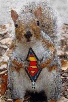 Job for Supersquirrel!