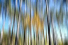 """Photography, """"Forest - Limited Edition 1 of Saatchi Art, Art Photography, Fine Art, Abstract, Artist, Image, Summary, Fine Art Photography, Artists"""