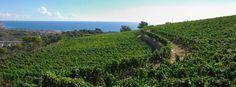 La Cantina Poggio dei Gorleri - Gorleri Wine Resort