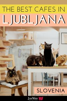 Who doesn't love Ljubljana? Okay, maybe you've never visited the charming capital of Slovenia, but once you see the city you'll certainly want to stay. Especially once you set foot in the best cafes in Ljubljana, Slovenia. We've rounded up our 10 favorite Ljubljana cafes (includes the Ljubljana cat cafe!) so you can plan in advance which Ljubljana coffee shop to visit between bouts of sightseeing. #ljubljana #slovenia #cafes #cafeshop #cofeeshop #coffeelove #catcafe