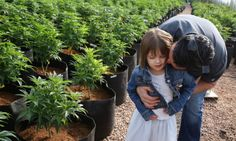 Finally, Some Hard Science on Medical Marijuana for Epilepsy Patients  Education is KEY!