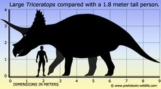 triceratops and human scale - Google Search
