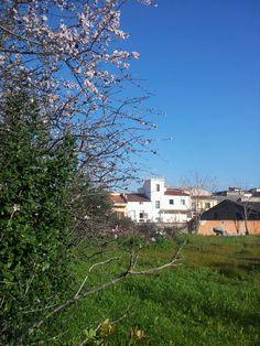 almond flower <3 Almond Flower, Garden, Flowers, House, Garten, Home, Lawn And Garden, Gardens, Gardening