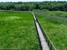 Podet spre observator ornitologic la Comana Romania, Railroad Tracks, Beautiful, Train Tracks
