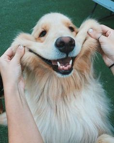 Dog pictures: cute and funny pictures of dogs - puppies .-Hundebilder: Süße und lustige Bilder von Hunden – puppies – Dog pictures: cute and funny pictures of dogs – puppies – - Super Cute Puppies, Baby Animals Super Cute, Cute Baby Dogs, Cute Little Puppies, Cute Funny Dogs, Cute Dogs And Puppies, Cute Funny Animals, Doggies, Funny Pets