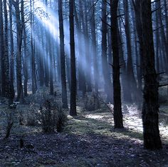 40+ Forest Photography That Will Give You The Spook