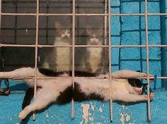 夫猫「なんか窓の方から音しない?」妻猫「き、気のせいよ」 間猫「......」