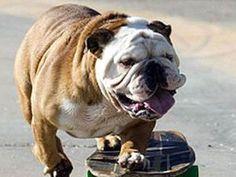 Tillman...skateboarding, surfing & snowboarding genius!