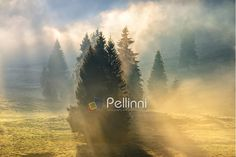 Find Cold Morning Fog Hot Sunrise Conifer stock images in HD and millions of other royalty-free stock photos, illustrations and vectors in the Shutterstock collection. Thousands of new, high-quality pictures added every day. Conifer Forest, Portfolio Design, Romania, Photo Editing, My Photos, Sunrise, Royalty Free Stock Photos, Country Roads, Clouds
