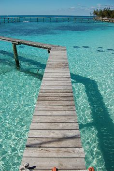 Stingrays - Discovery Island, Nassau, Bahamas