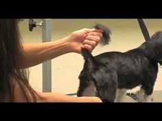 Wahl Professional Dog Grooming The Tail - http://www.7tv.net/wahl-professional-dog-grooming-the-tail/